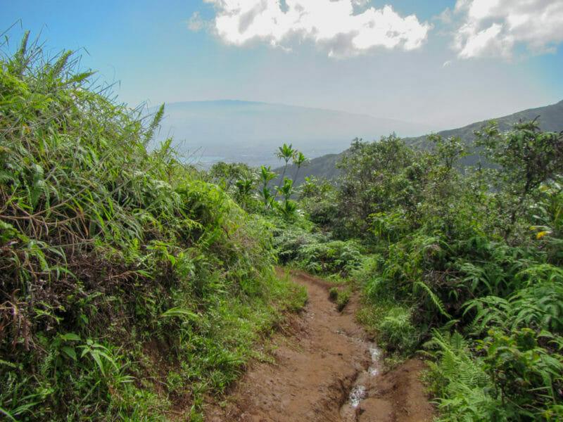 Waihee Ridge Trail 1