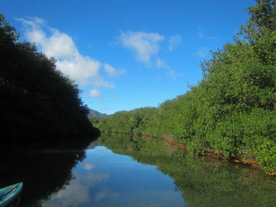 Kauai Stand Up Paddle Board