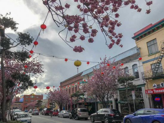 Chinatown Cherry Blossoms Victoria