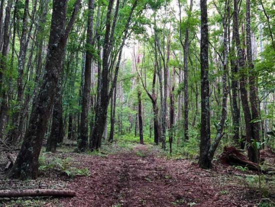 Kahakapao Loop Trail